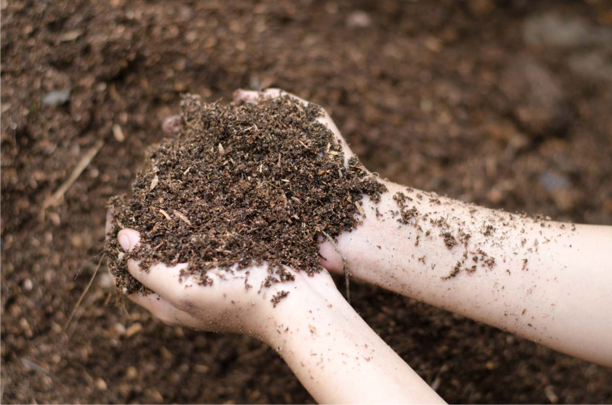 suolo adatto allo zafferano