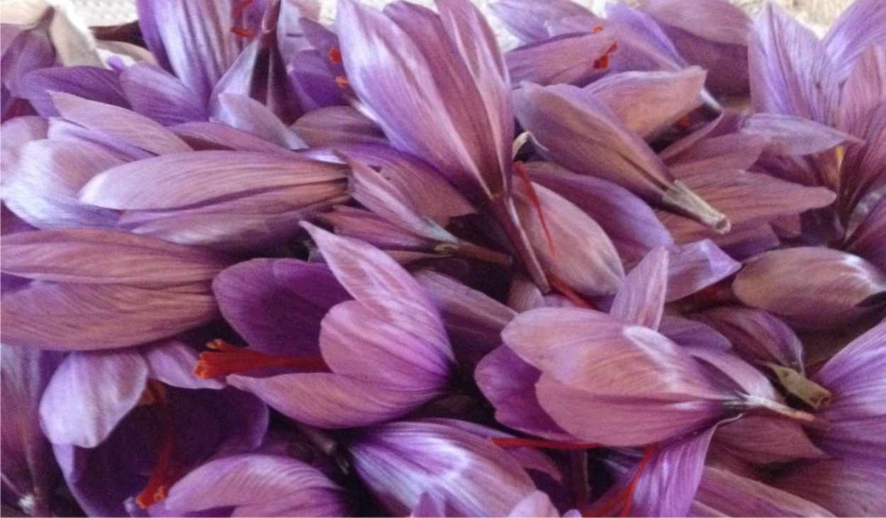 fiori raccolti con petali